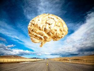 структуры мозга