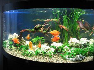 аквариум успокаивает нервы