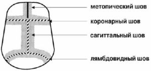 черепные швы