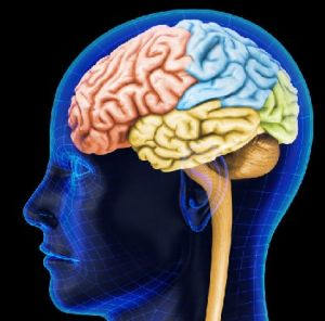 лобная доля мозга