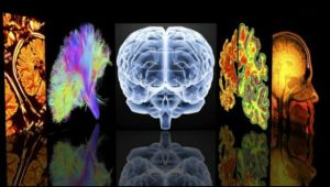 активность и сон мозга