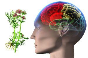 народное лечение эпилепсии