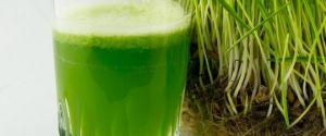 сок из зеленых верхушек овса