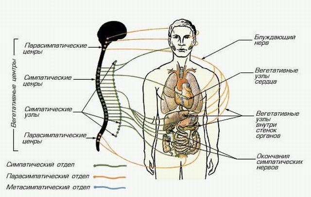Дисфункции вегетативные