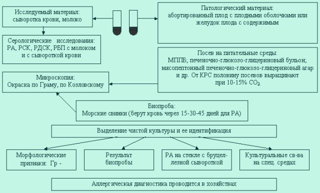 Схема лабораторной диагностики