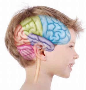 эпилептическая активность в мозгу ребенка