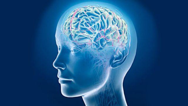 Головной мозг крупно