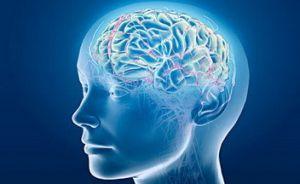 мозг в работе