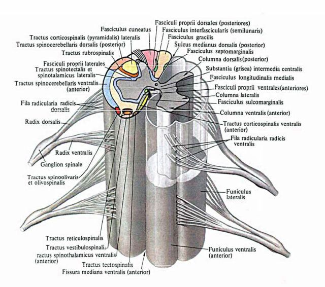 Боль под левой лопаткой сзади со спины отдает в ключицу