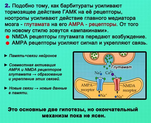 Механизм действия ноотропов