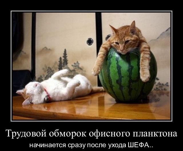 Демотиватор пр обморок