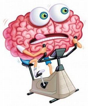 Феноменальный мозг