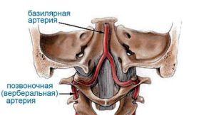 Артерии шейного отдела