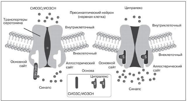 Как действует Ципралекс