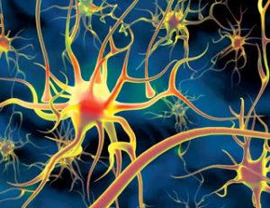 нейроны головы