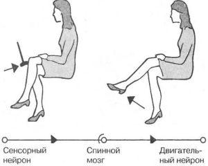 Нормальный рефлекс