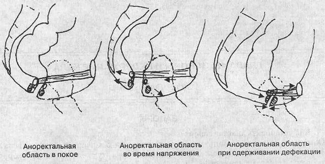 Аноректальная область