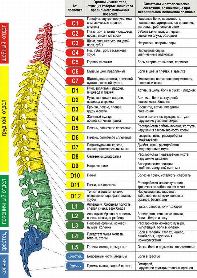 Радикулопатия l5 s1 симптомы