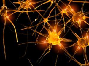 движение нейронов