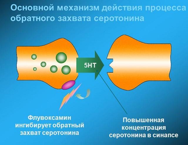 ингибиторы обратного захвата серотонина