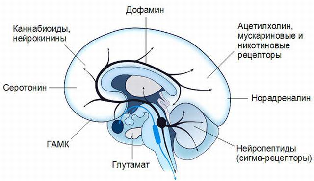 Нейромедиааторы