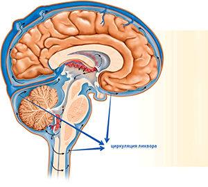 Ликвор головного мозга