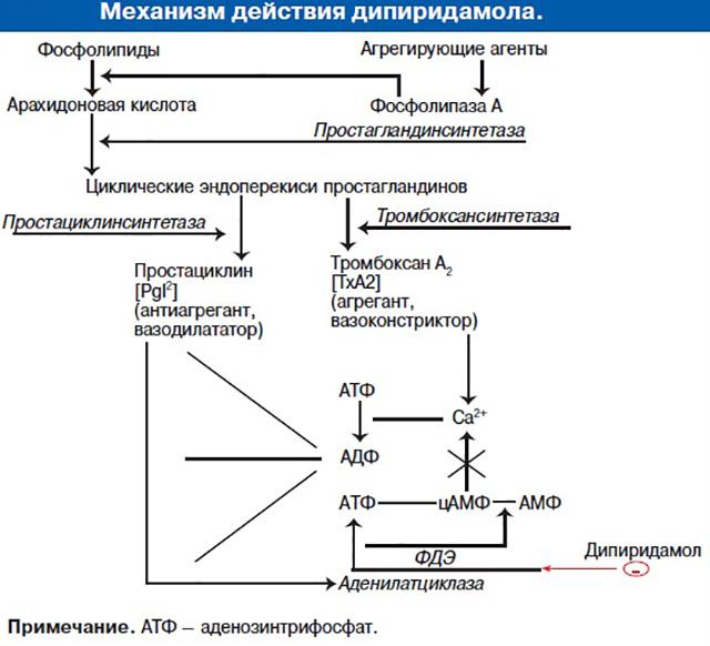 Как работает Дипиридамол