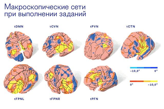Карта связей мозга