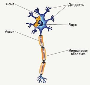 Что такое нейрон