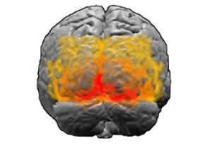 Зрительная кора мозга