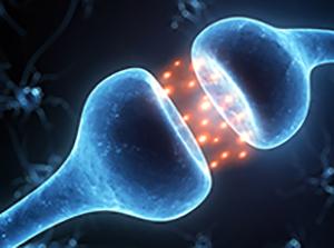 Что такое синапсы