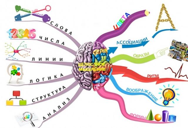межполушарная асимметрия мозга