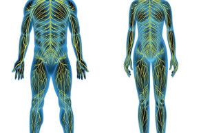 Симпатическая нервная система