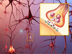 Что такое нейромедиаторы