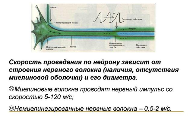 Скорость передачи импульса