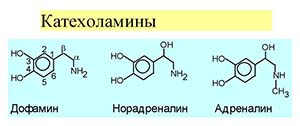 Группа гормонов катехоламинов