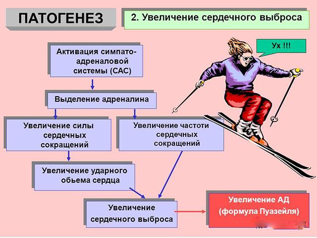 Защитные функции симпатоадреналовой системы