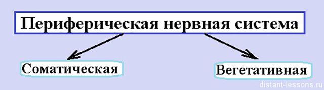 Состав ПНС