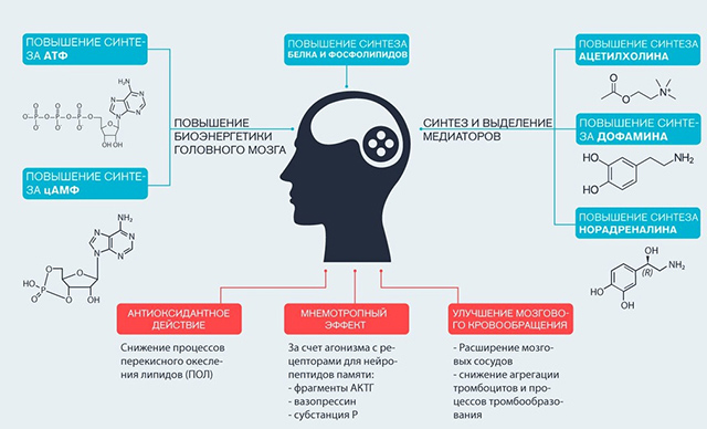 Механизм действия Оксирацетам
