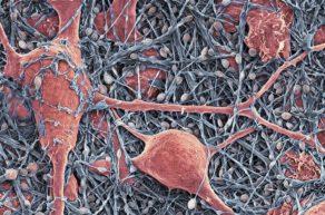 Строение нейроглии