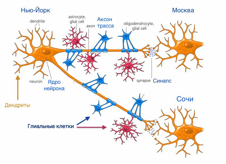 Прохождение импульса по нейронам