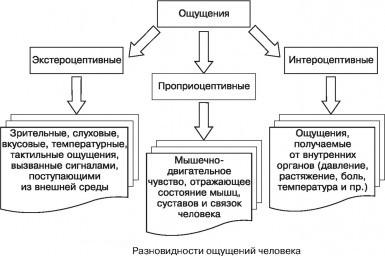 Разновидности механизмов человека