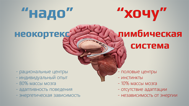 Неокортекс