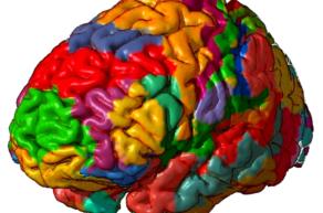 Поля головного мозга