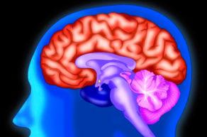 Липома мозга