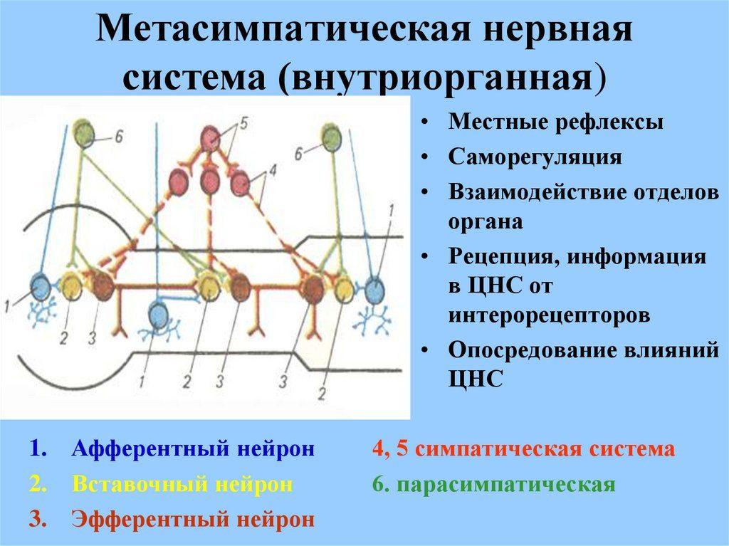 Внутриорганная система