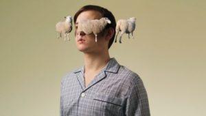 овцы во сне