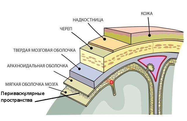 Периваскулярная зона