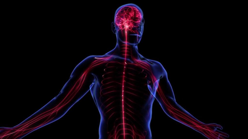Крепкая нервная система – залог хорошего здоровья